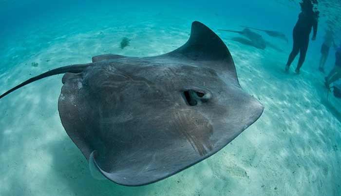 акулы в доминикане