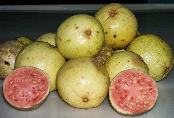 фрукт манго в доминикане