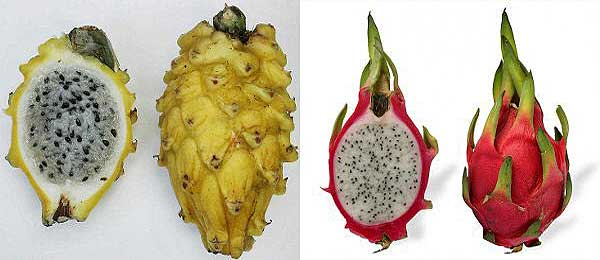 фрукт питахайя