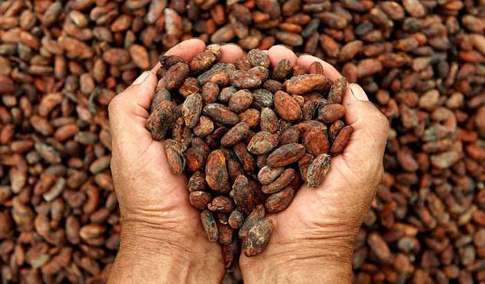какао в доминикане