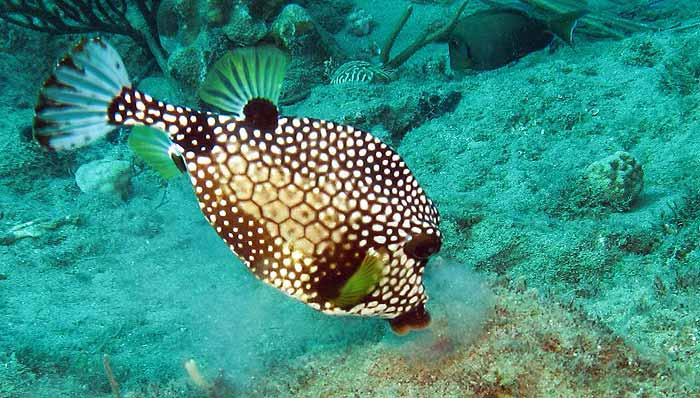 рыба в доминикане