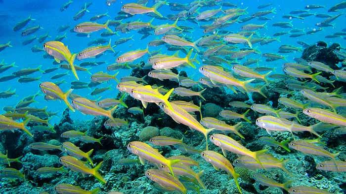 рыбы в доминикане еоторую можно поймать